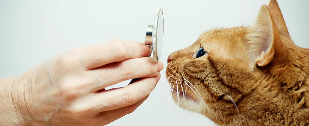exames-cao-gato